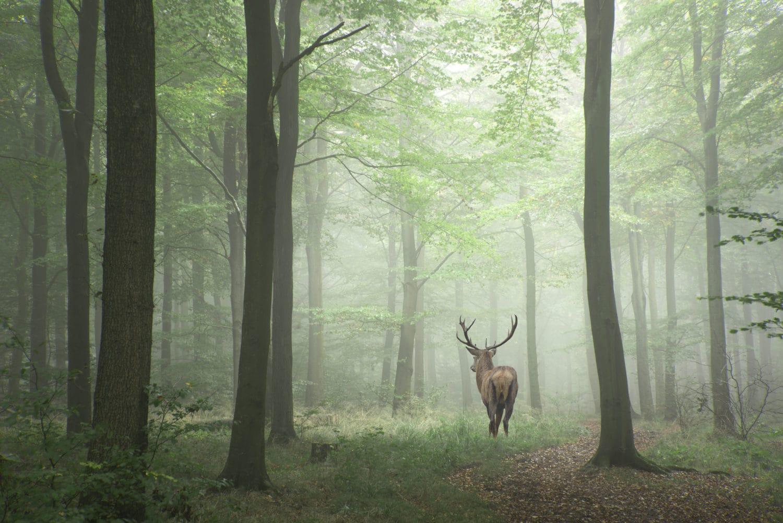 Het Odenwald één van de mooiste bossen van Duitsland