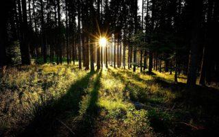 Zon schijt door bomen in Beieren
