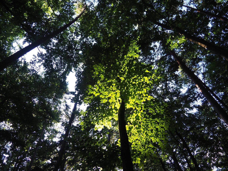 Spel van licht en schaduw in het Beierse bos