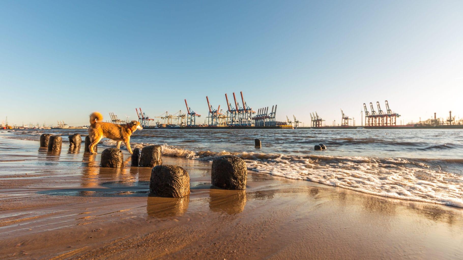 Elbecamp is een van de leukste stadscampings in Duitsland met op de achtergrond der havenkranen van Hamburg
