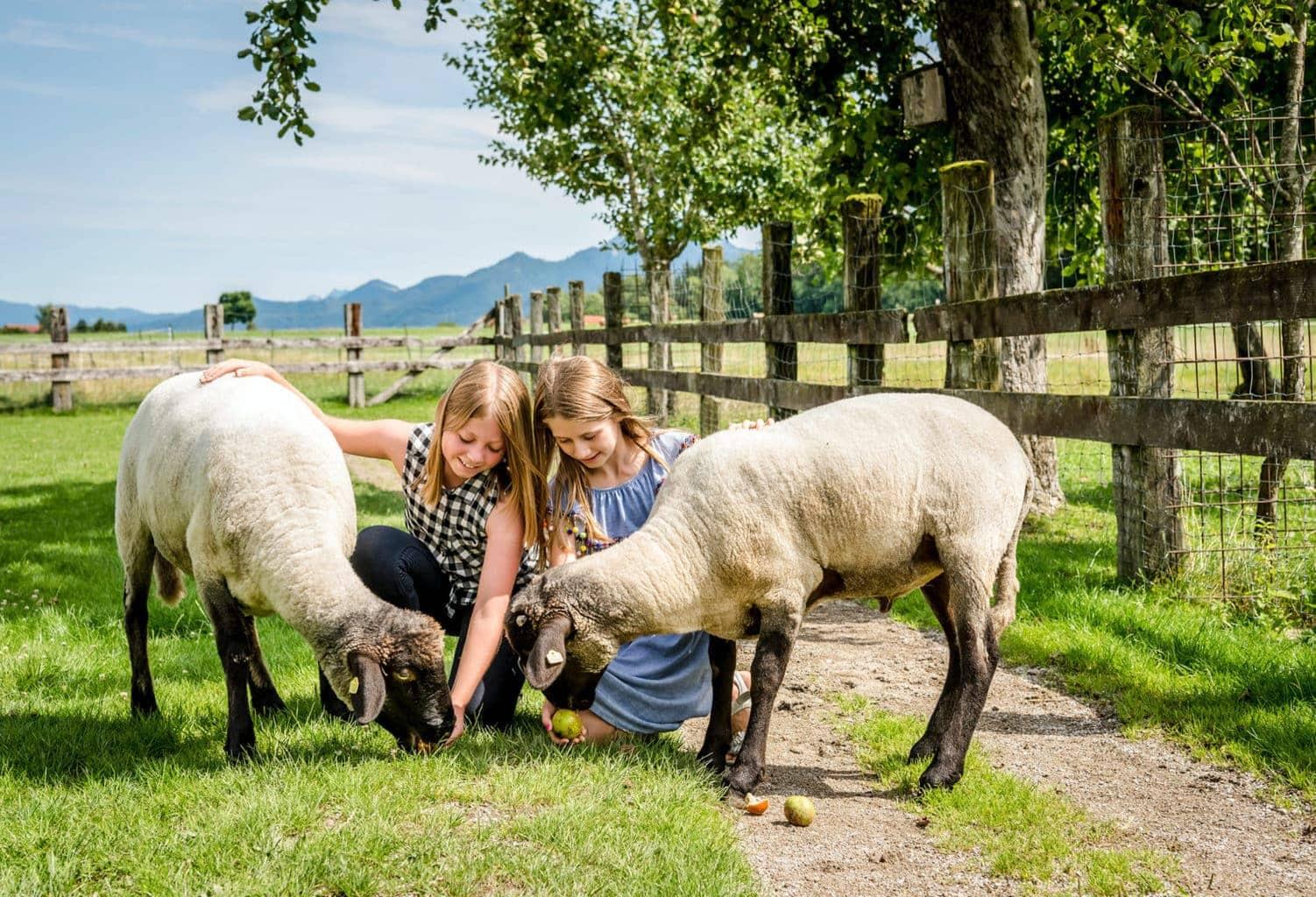 Kinderen spelen met schaapjes op borderij Hanznhof in Beieren