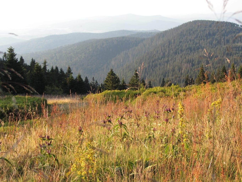Ochtendstemming in de bergen van het Beierse woud