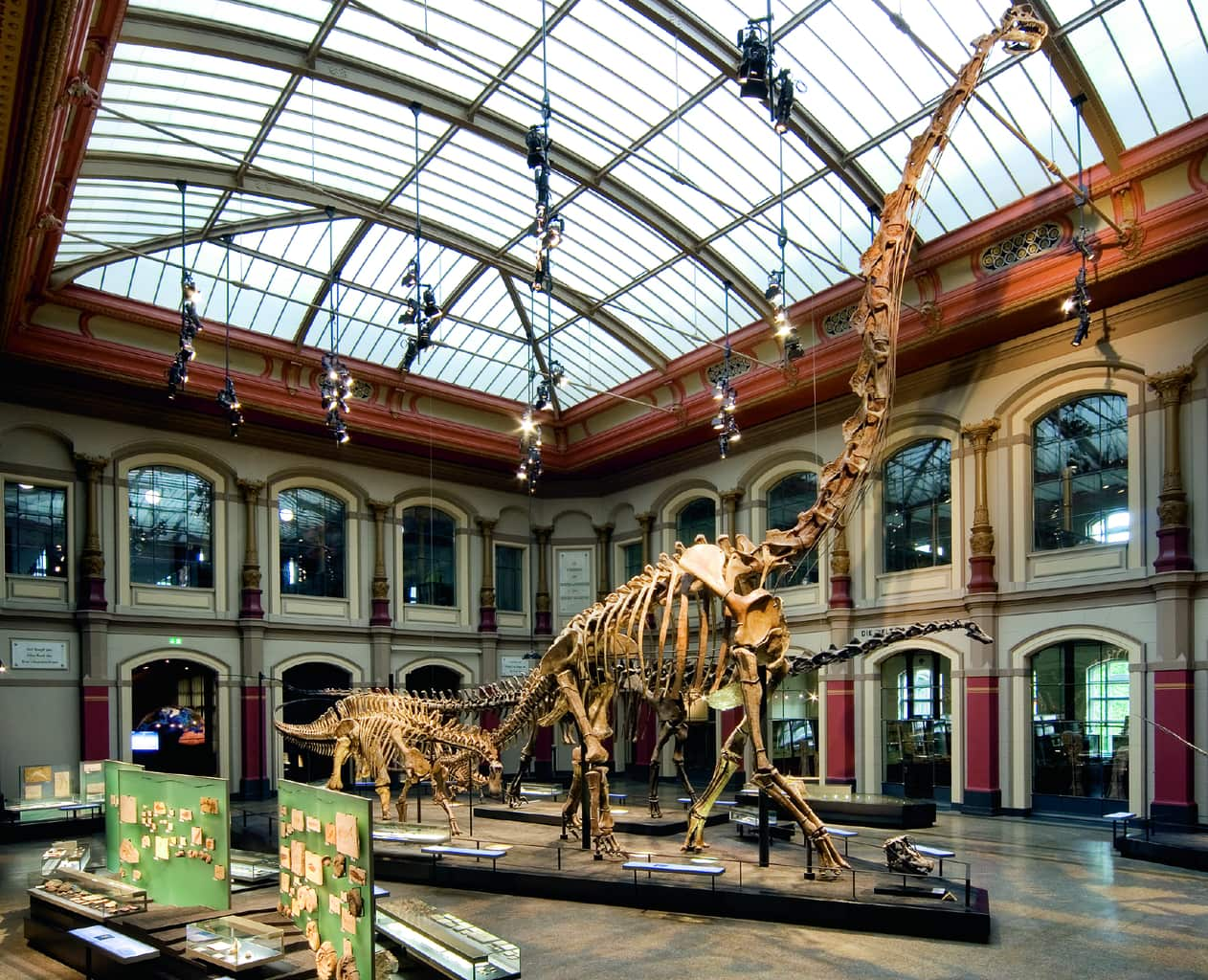 Dinosaurussen in Duitsland