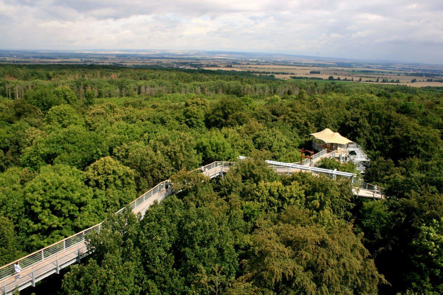 Boomtoppenwandelpad in nationaal park Hainich in Thüringen