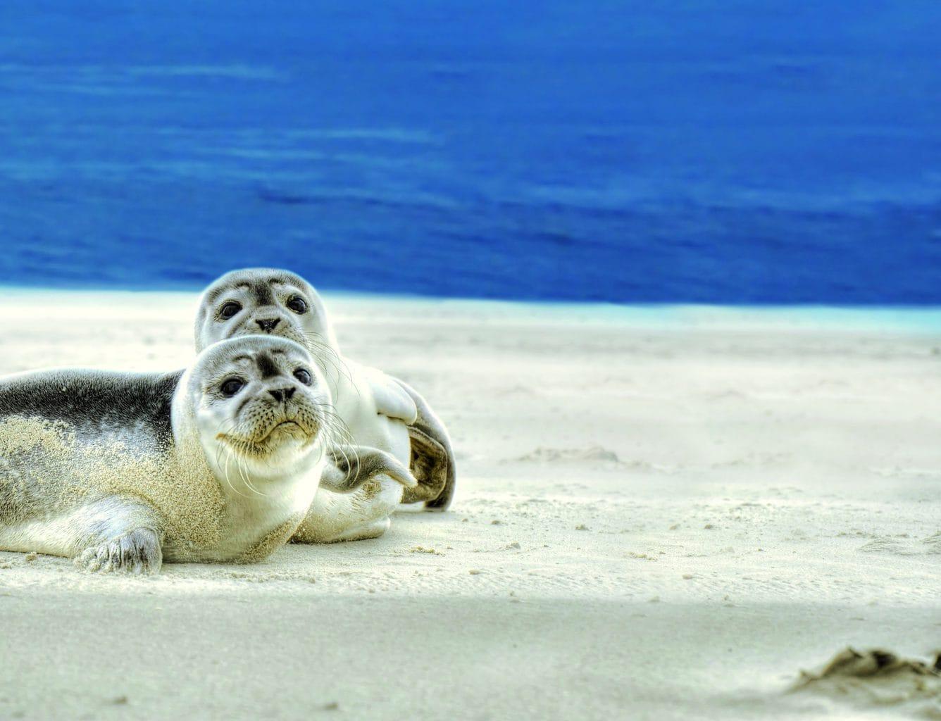 Zeehonden op een zandbank bij Noordzeeieland Spiekeroog
