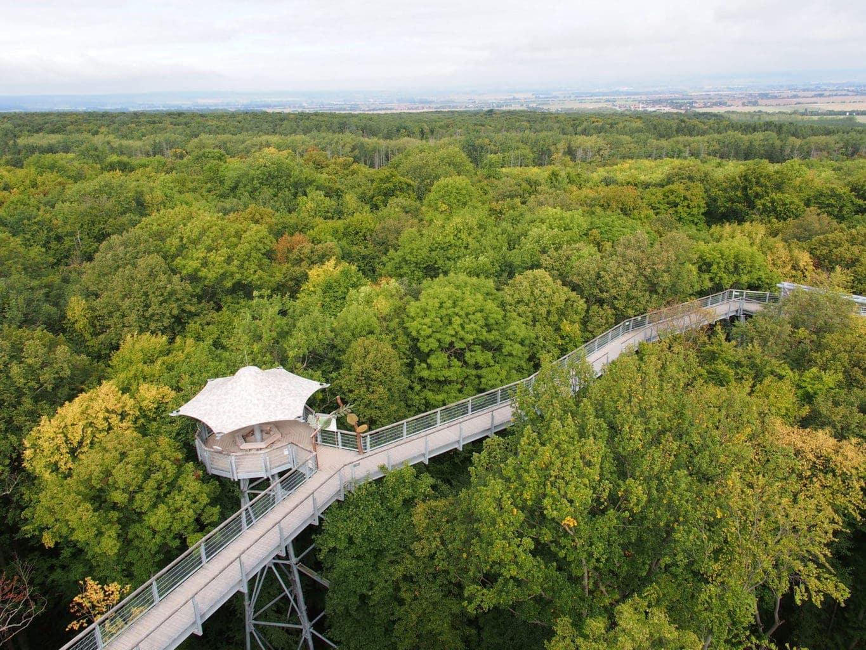 Een boomwandelpad in Nationaal Park Hainich in het centrum van Duitsland