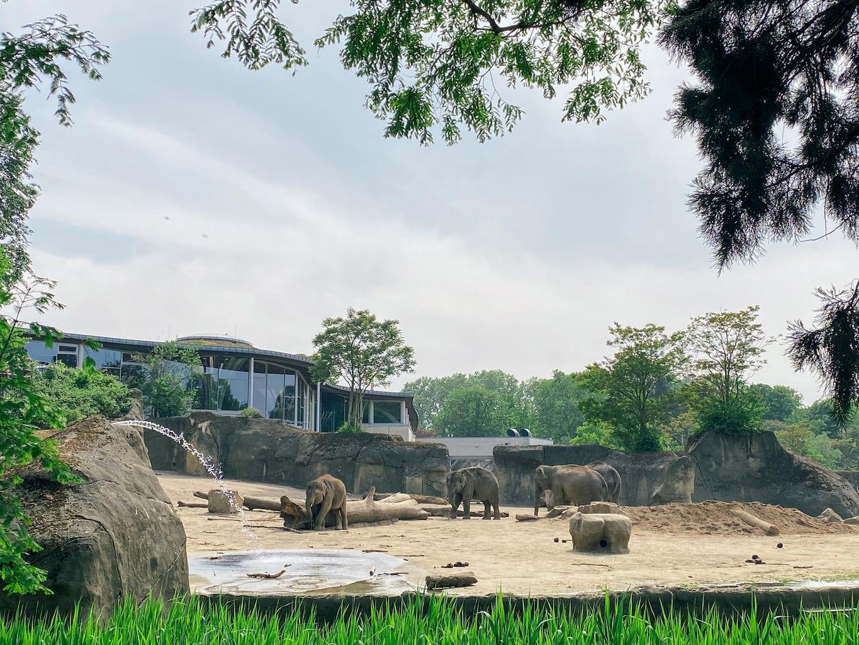 Het olifantenhuis van de zoo in Keulen