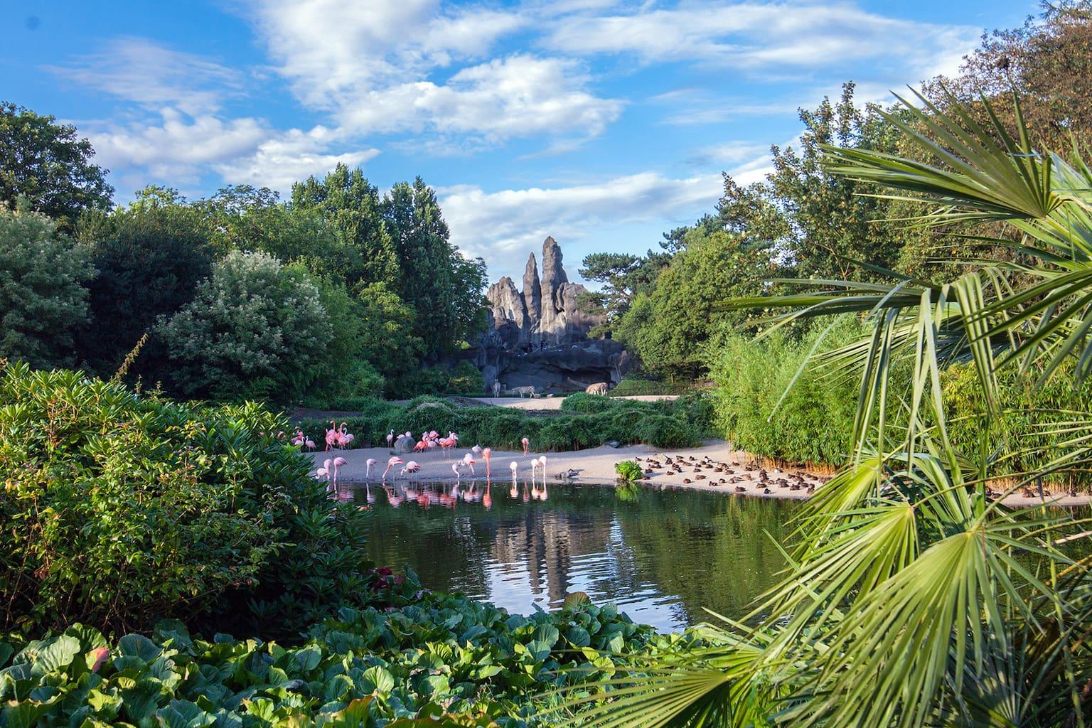 Een Afrikaans landschap in dierentuin Hagenbeck in het Duitse Hamburg