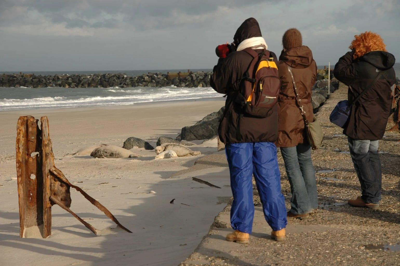 De kegelrobben op Helgoland worden een toeristische attractie. Wel mag je niet dicht bij komen