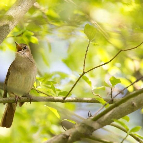 Een zingende vogel in een boom in Duitsland