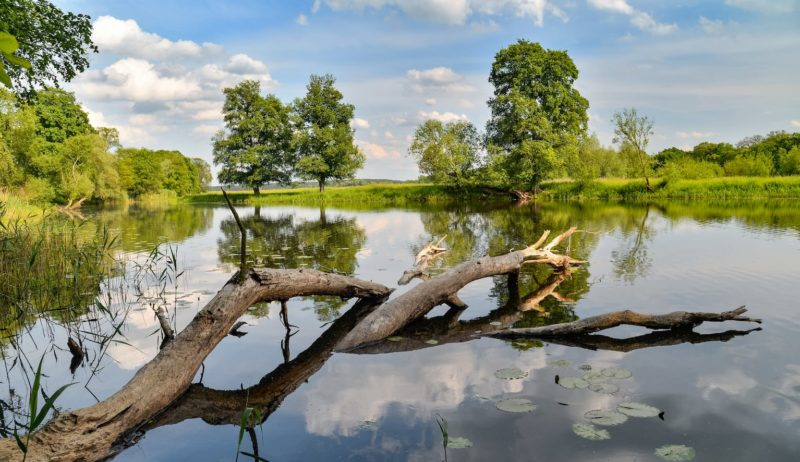 Nationaal Park Unteres Odertal