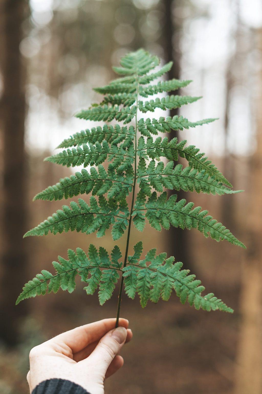 Tak van een boom in het Duitse Beieren