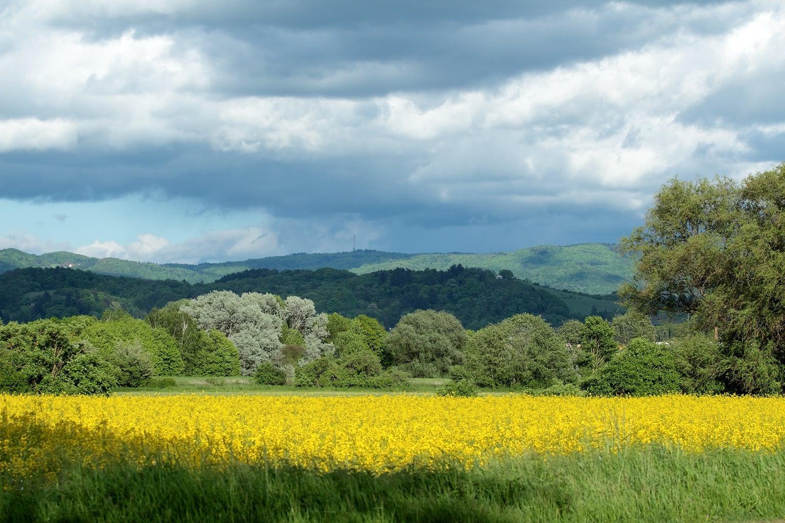 Een veld met bloemen, bossen en heuvels is een typisch gezicht in Hessen