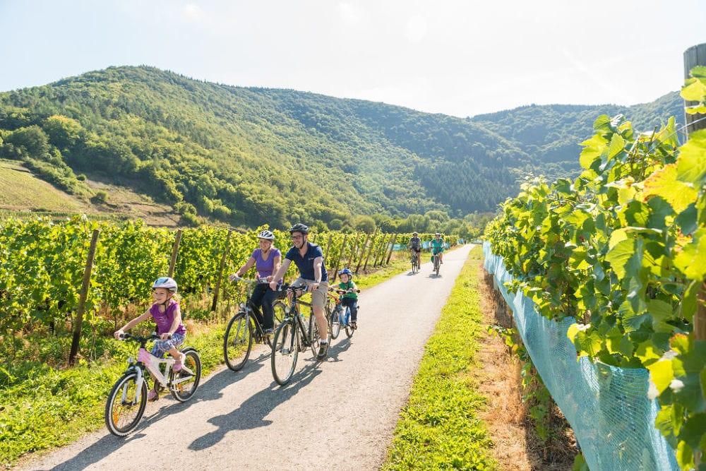 Wijnkelder van de Winzernossenschaft Mayschoss met vaten