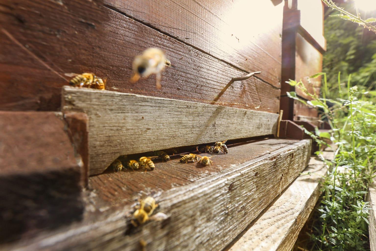 Ook insekten vinden de omgeving van het Hotel prettig