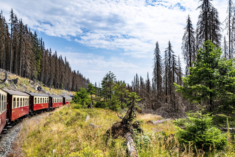 Een trein rijdt in het nationaalpark Harz