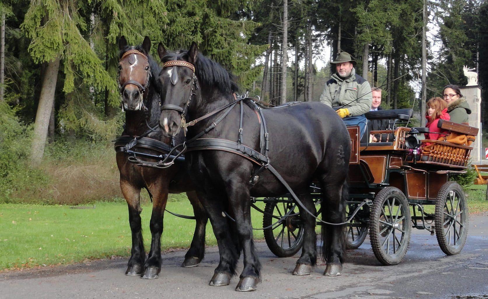 Een paardenkoets in Ilmenau in het Thüringer woud