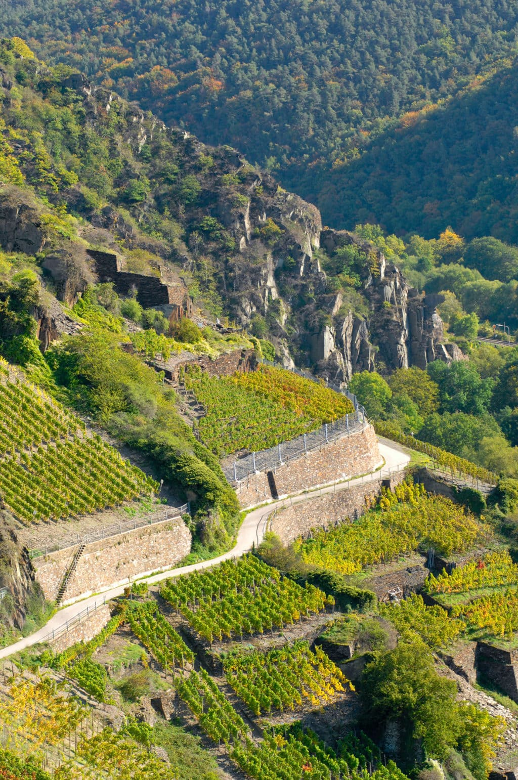 De Wijnbergen in de buurt van het dorpje Mayschoss aan de Ahr