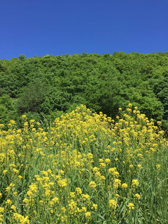 Blauw, groeen een geel zijn typische kleuren van het nationaalpark Eifel
