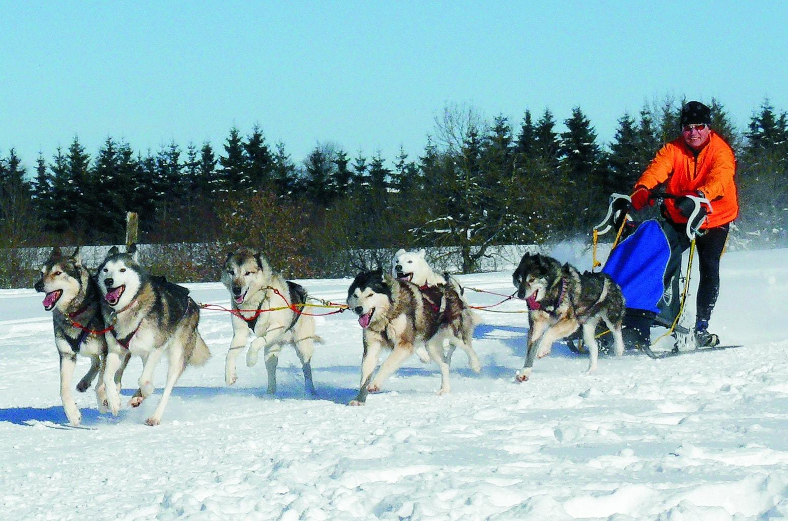 Sledehonden tijdens een race in de winter van Ilmenau in Thüringen