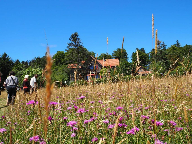 Wandelen in de velden bij Bingen aan de Rijn
