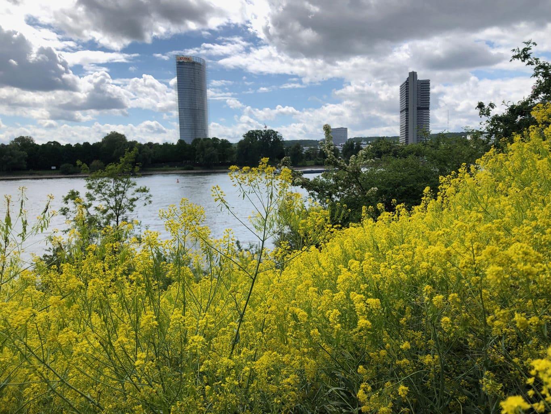 Bloemen aan de Rijn met uitzicht op het voormalig regeringskwartier