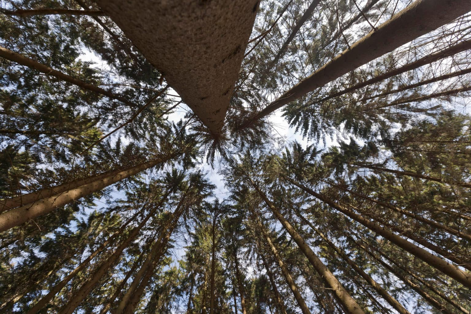 De Bomen in het Bergische Land behoren tot de aantrekkelijke uitstapjes rondom Keulen