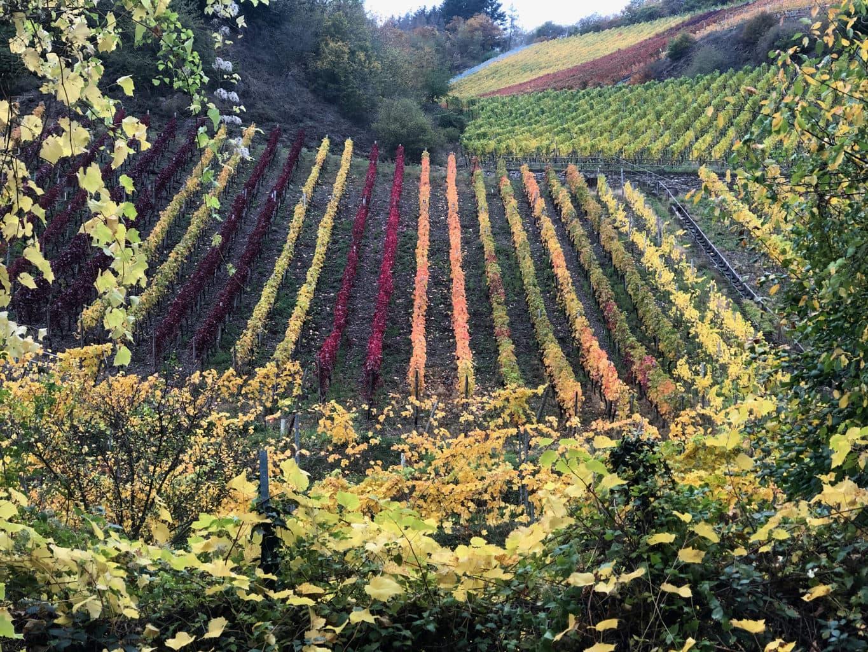 De wijnbergen aan de Ahr hebben in de herfst een breed spectrum aan kleuren
