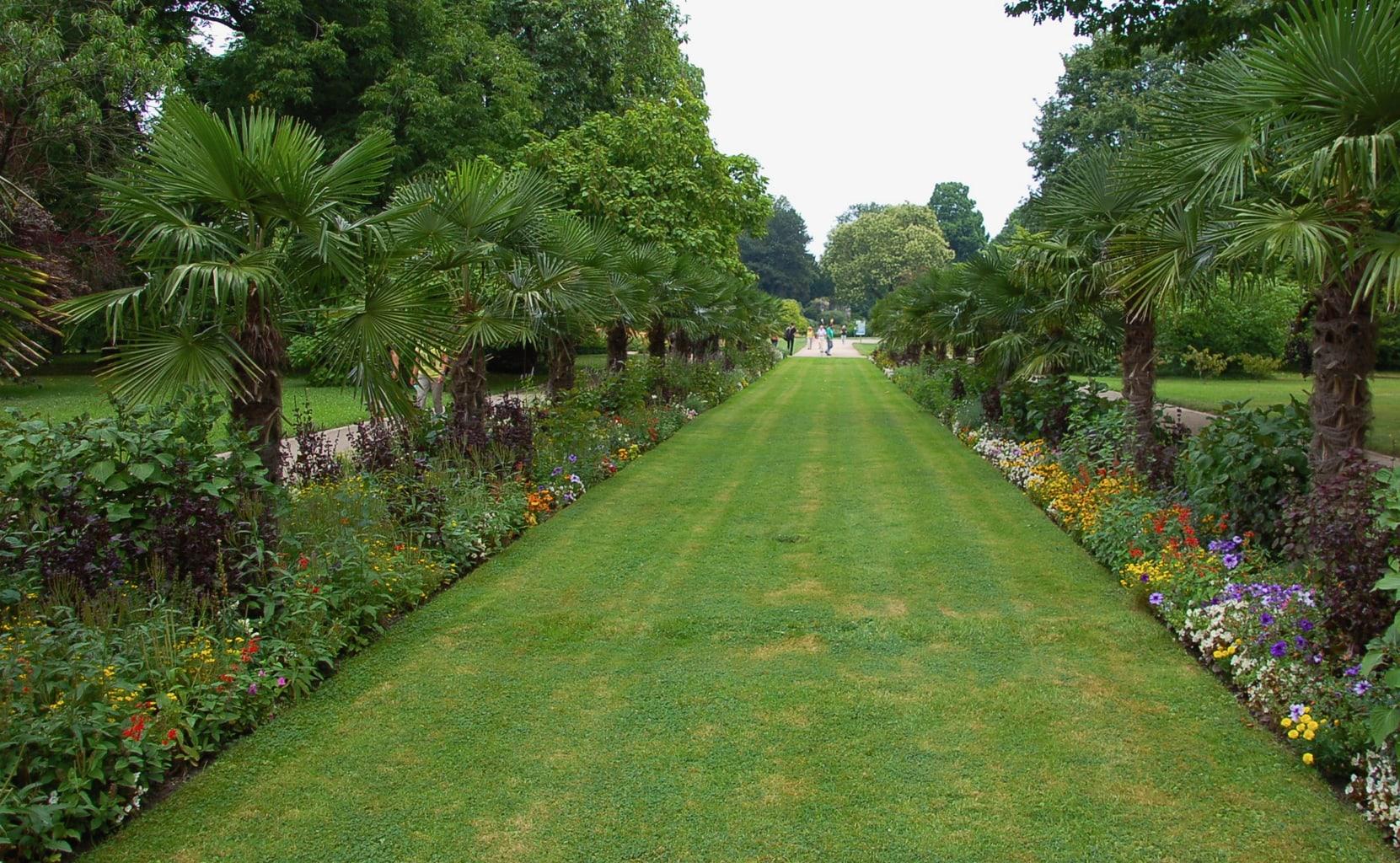 De Flora in Keulen is een van de mooiste tuinen in Duitsland mede dankzij de palmenallee