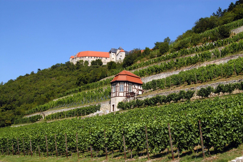 Hertioglijke wijnberg met huisje en kasteel in de regio Saale-Unstrut