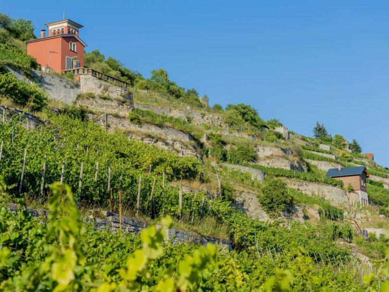 Kleine wijnberghuisjes zijn een van de kenmerken van de regio Saale-Unstrut