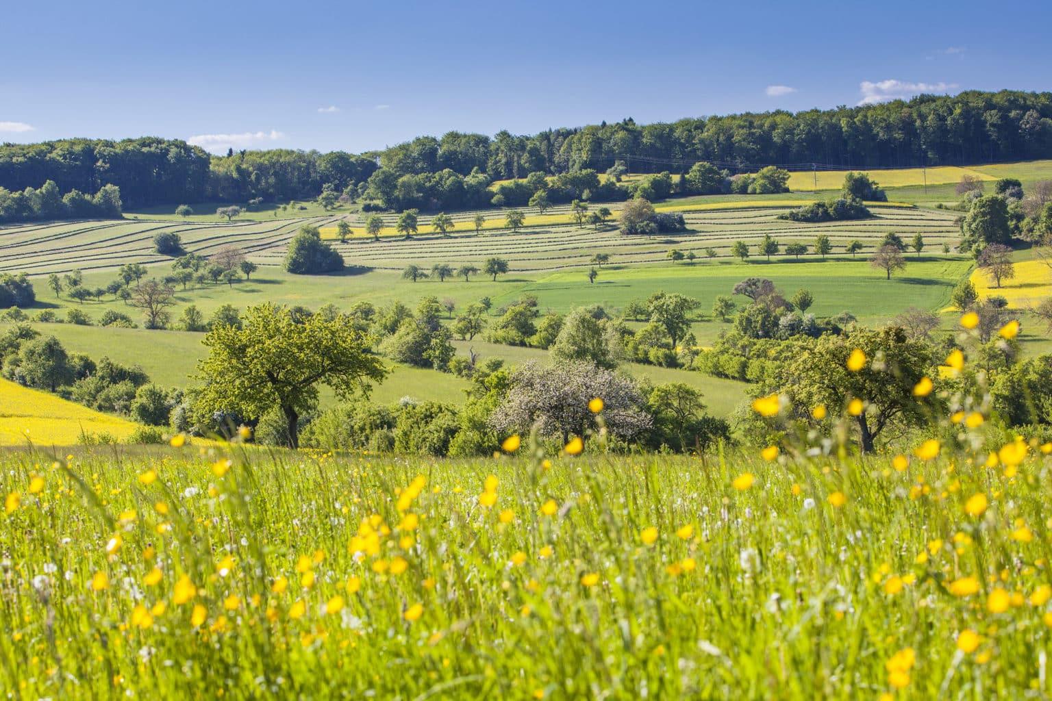 Bloemen op een grasveld in de Hunsrück in het Saarland