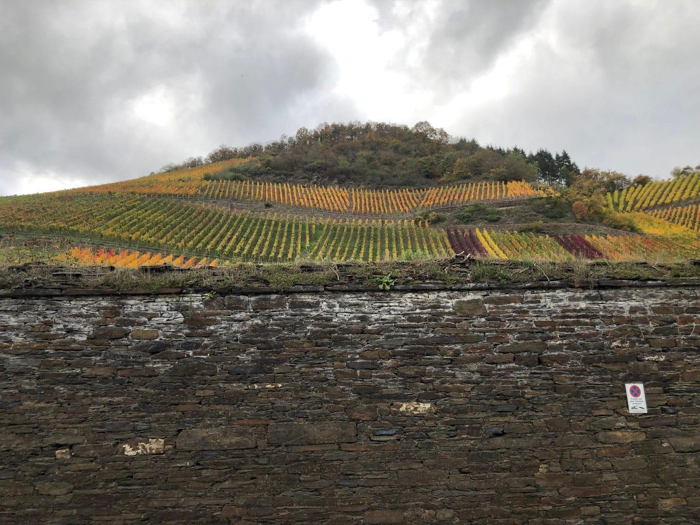 Wijnstokken achter een muur in het Ahrdal