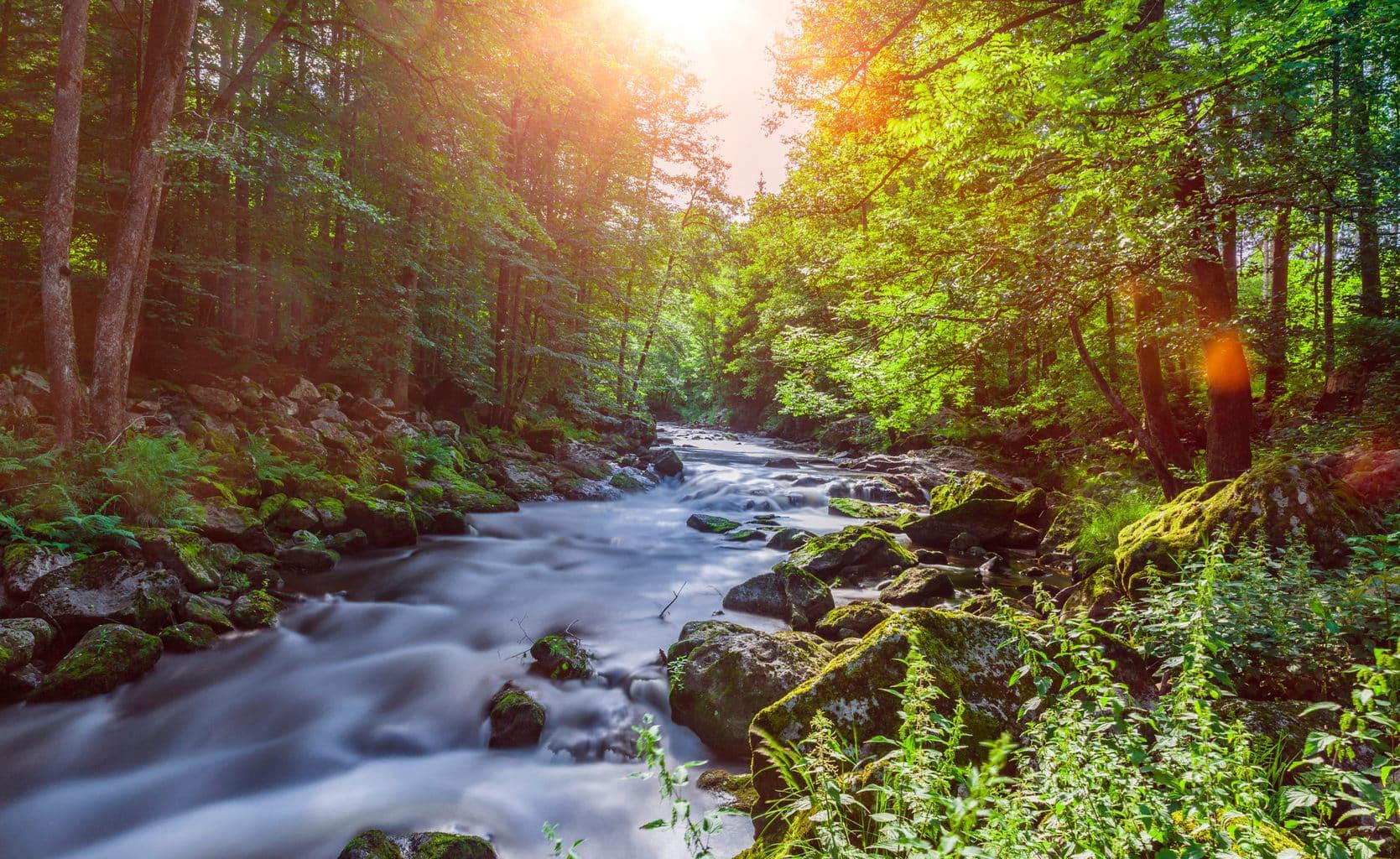 Bovenloop van de rivier Ilz in het Beierse Woud