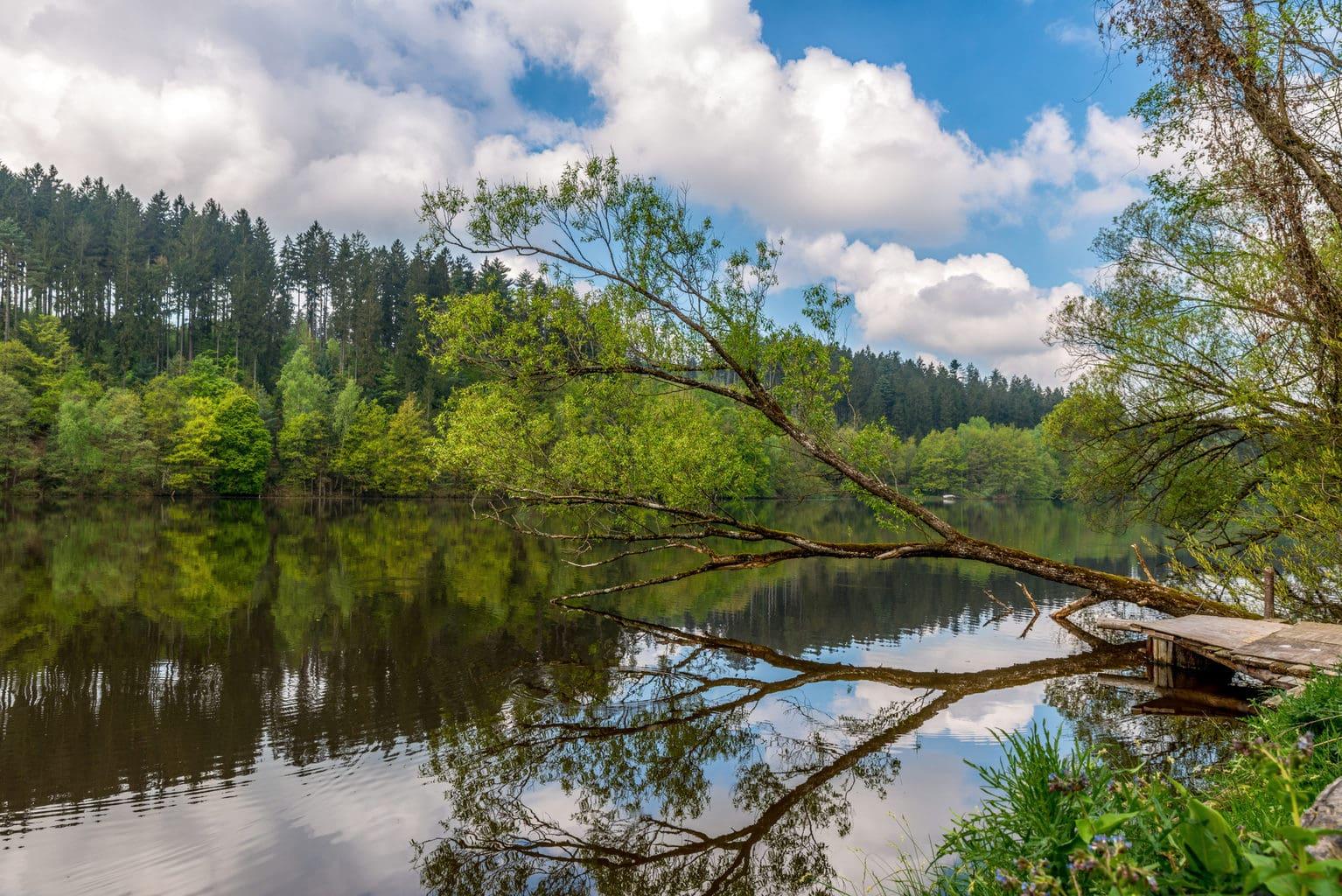 De rivier Ilz met bomen en bos in het Beierse Woud