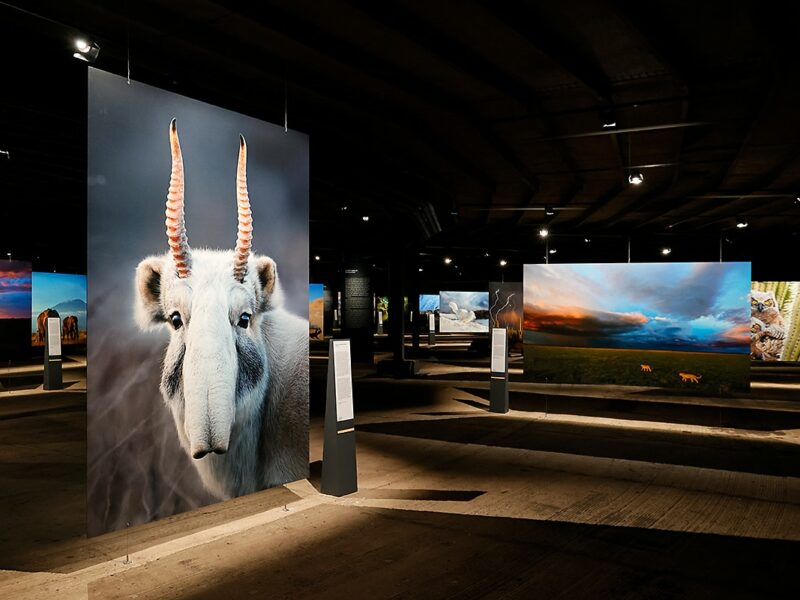 Tentoonstelling met foto's van zeldzame dieren in Gasometer Oberhausen