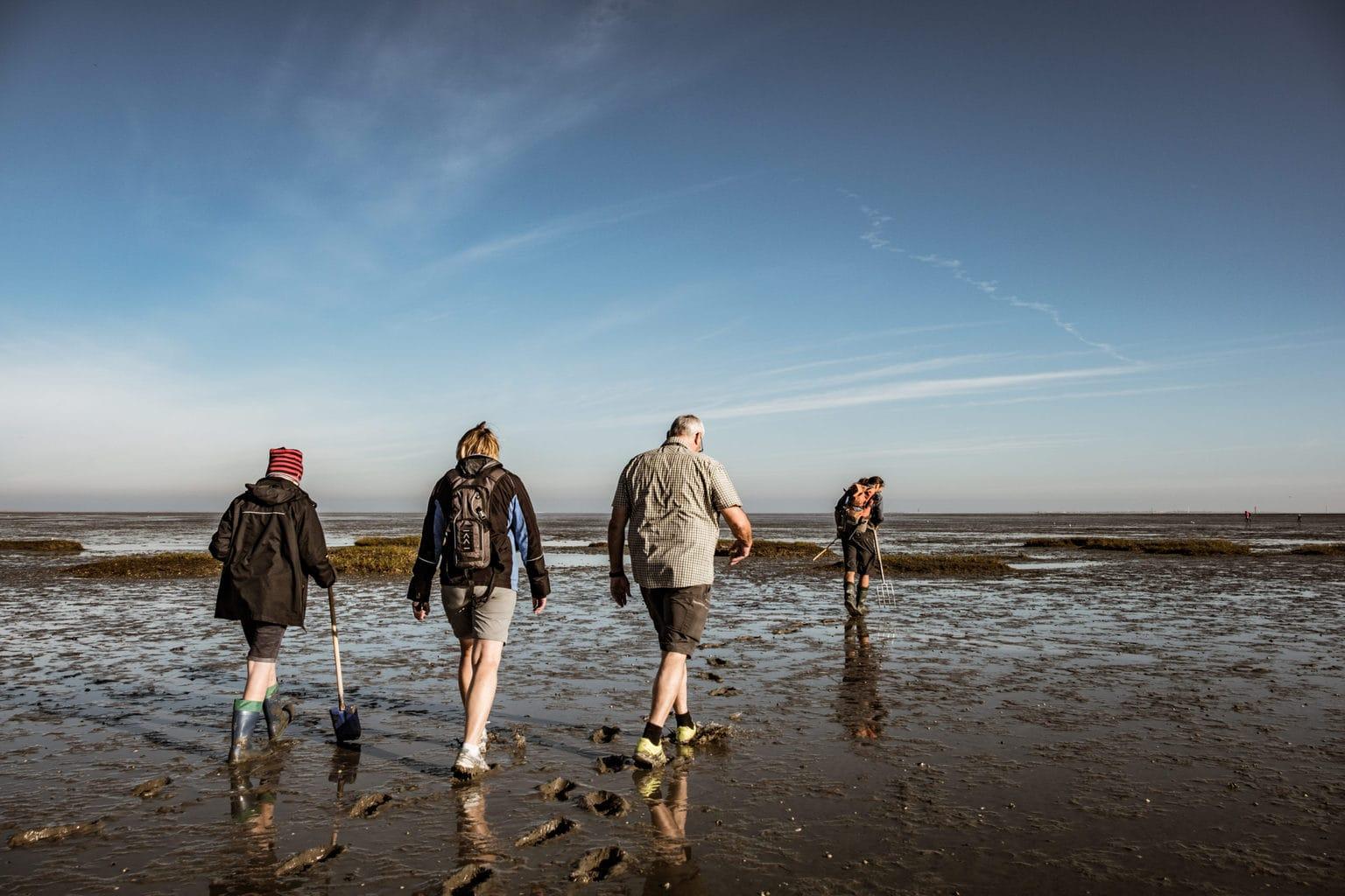 Wadwandelaars aan de Duitse Noordzeekust in de waddenzee
