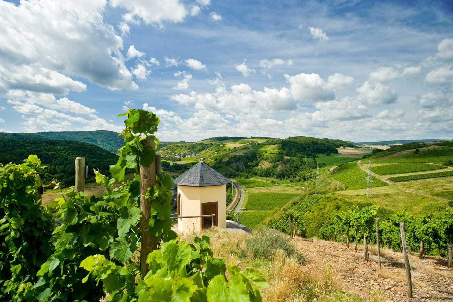 Een romantische wijnberg in de buurt van de Nahe in Rijnland-Palts