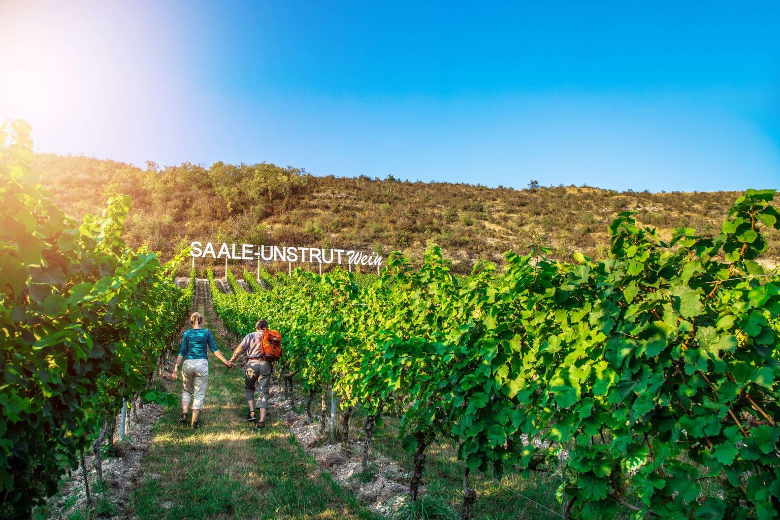 Een beetje zoals Hollywood: wijnbergen in de regio Saale-Unstrut met een wandelend stel