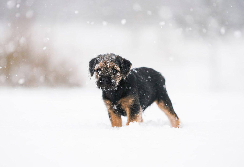 Een hondje in de nieuwe sneeuw