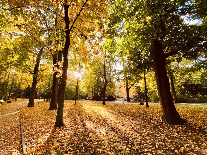 Herfst met gele bladeren tijdens zonsondergang in park in Regensburg