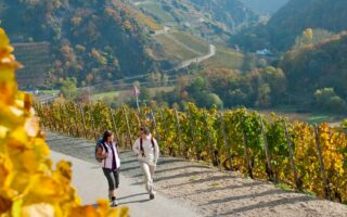 Wandelaars in het vallei van de Ahr in Rijnland-Palts tijdens de herfst op het rodewijnwandelpad