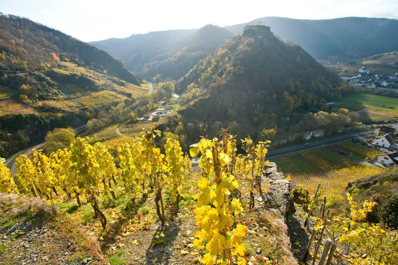 Het romantische plaatsje Mayschoss in het vallei van de Ahr in de herfst op het rodewijnwandelpad.