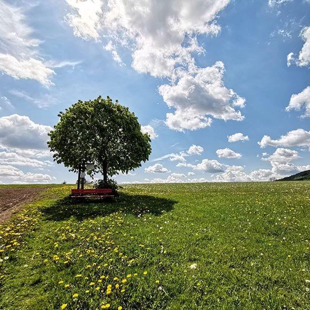 Op de 'Landschaftstherapeutische Weg' in het Sauerland komen vakantiegangers langs 13 haltes, waar wordt geleerd hoe je in de natuur iets voor je lichamelijke en geestelijke gezondheid kunt doen. 🌲🧘🌱 De volledige tekst van onze wandeltip in juni vind je als je de link in onze bio volgt! 🙌  #sauerland #wandelen #gezondheid #duitsland #vakantie #wandelvakantie #evenweg #vakantiedichtbijhuis #ontspanning #balansvinden #evenwicht #reisinspiratie #natuurvakantie #wanderlust #bloemenweide #uitzichtje #zen #bijkomen #natuurfotografie #natuurkracht #moedernatuur #blauwehemel #zomer2020